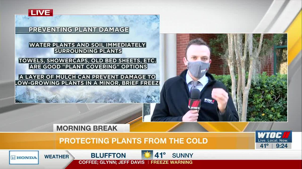 How to Protect Your Outdoor Plants During this Cold Weather