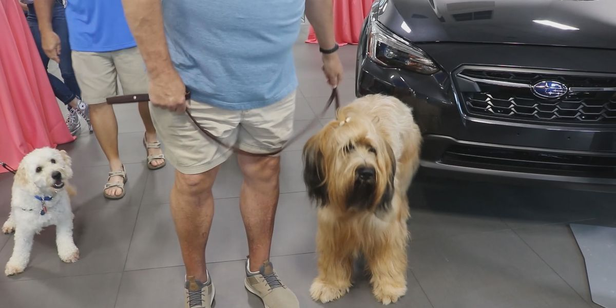 Lowcountry car dealership hosts Yappy Hour