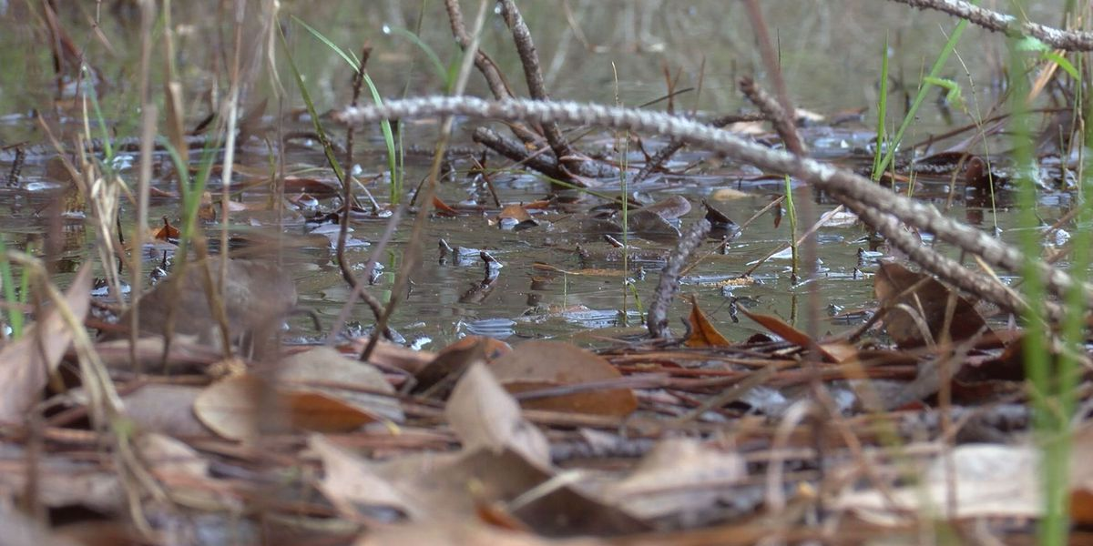 Flooding, heavy rains leave behind breeding grounds for mosquitoes