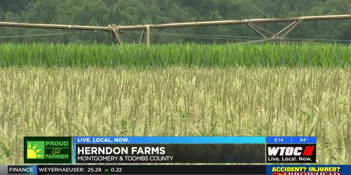 Proud to be a Farmer: How recent weather affects corn crops