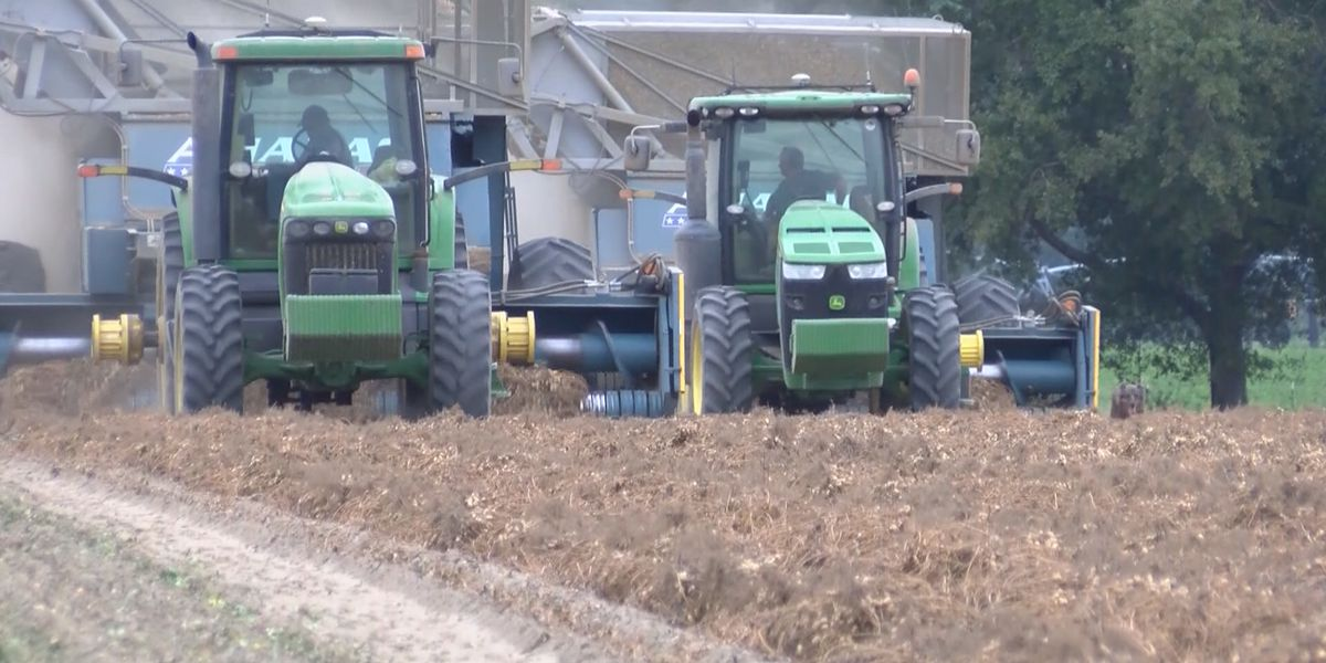 COVID-19 continues to impact agriculture across Georgia