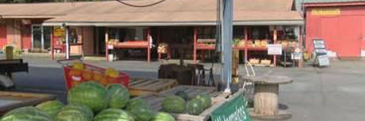 Savannah State Farmers Market to host festival series, looks to attract more shoppers