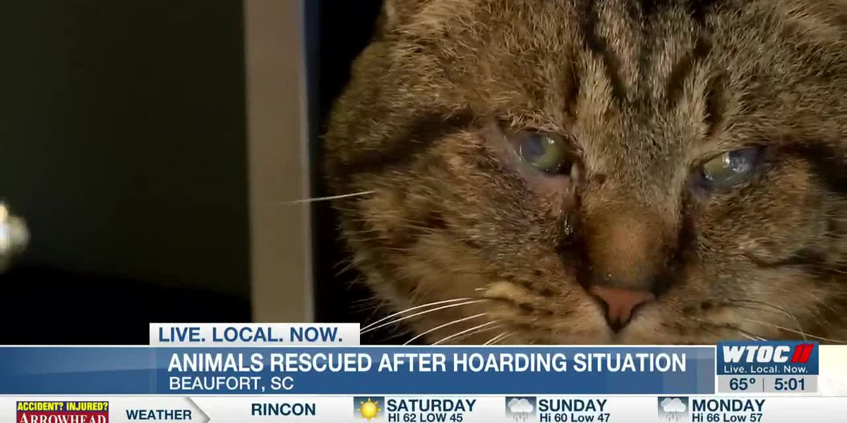 Beaufort home condemned after 18 cats, turtle found in unsafe conditions