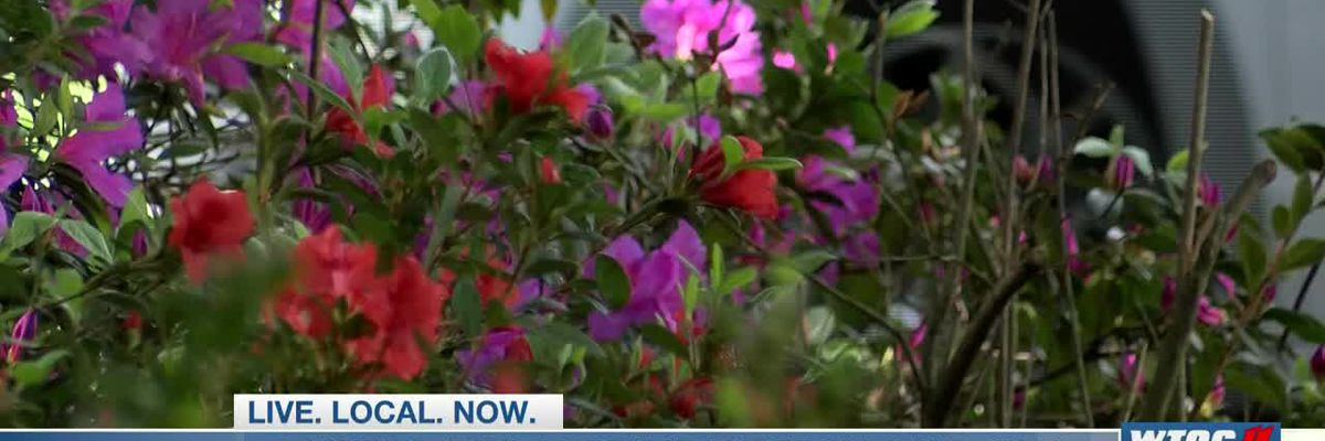 City of Savannah monitoring downtown flowers during cold snap