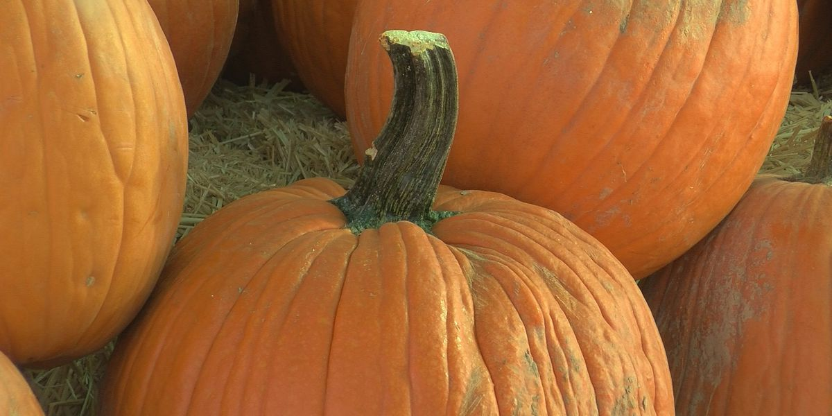 Richmond Hill holding virtual pumpkin carving contest