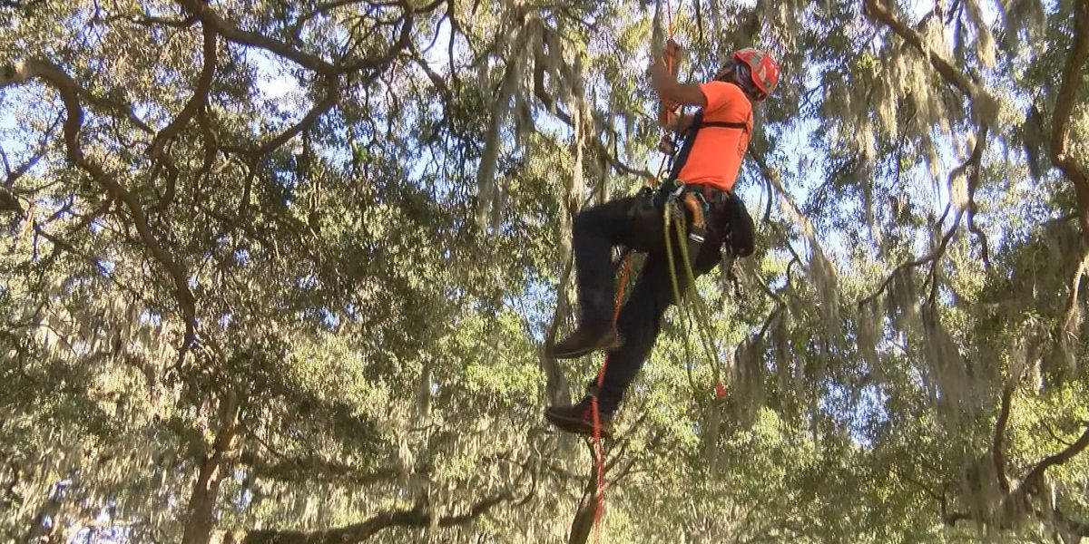 Tree climbing competition coming to Savannah