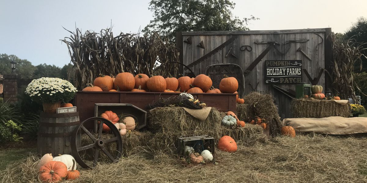 Opening weekend for Holiday Farm's pumpkin patch