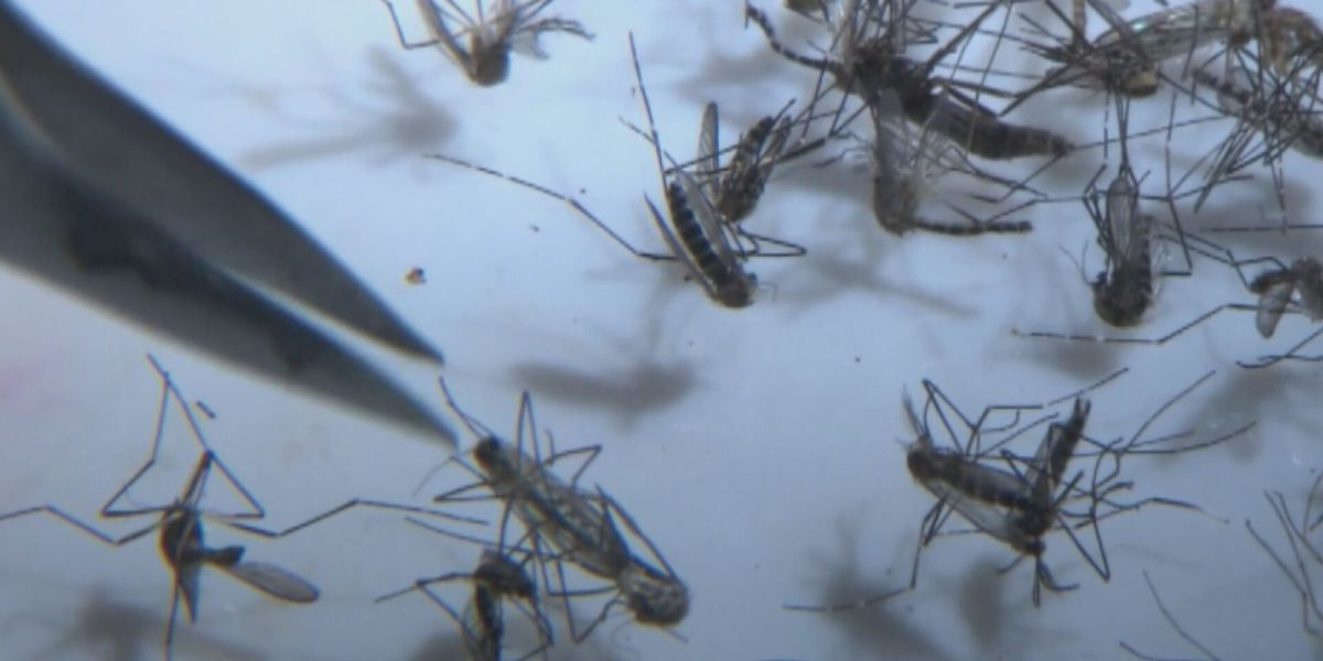 DHEC asking residents to submit dead birds for testing to help track West Nile virus