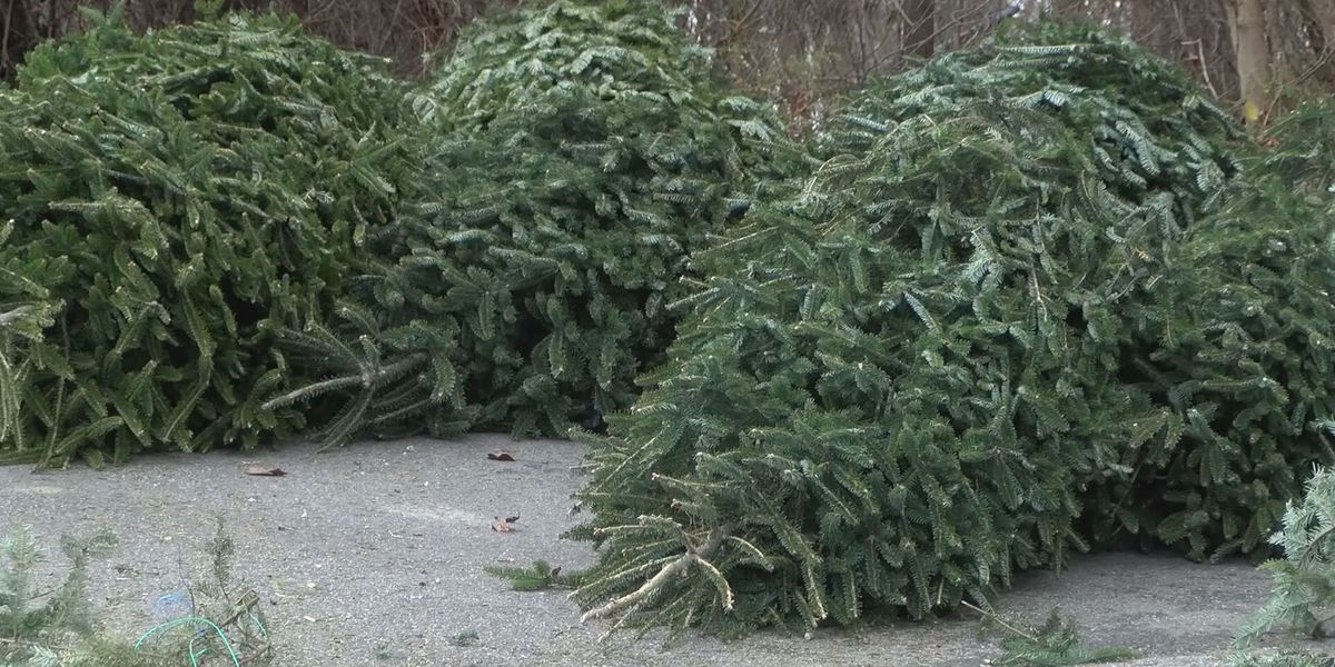 Beaufort Co. recycling your Christmas trees