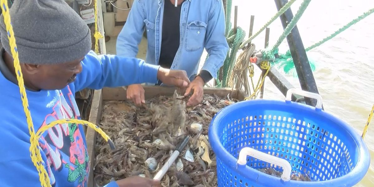 Fisherman claimed buying 2 tons of shrimp convicted of fraud
