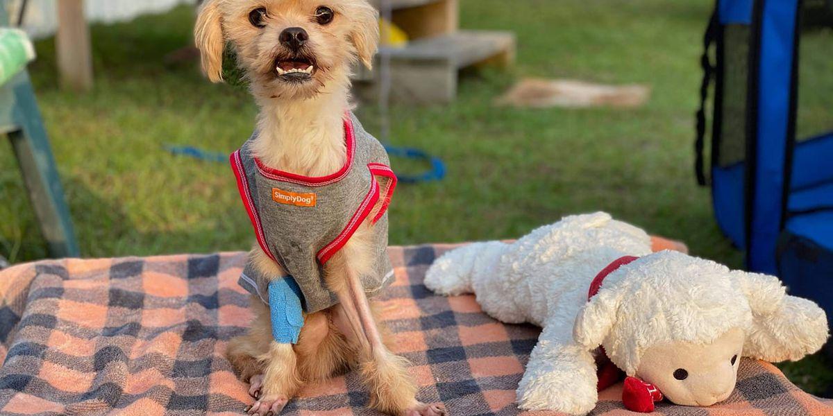 Reward offered in abandoned dog case in Brunswick