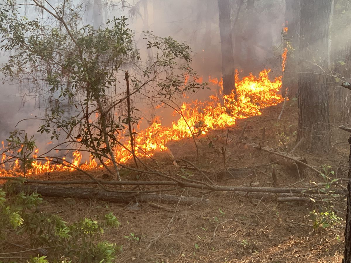 Wildfire contained after burning approximately 100 acres in Bulloch Co.