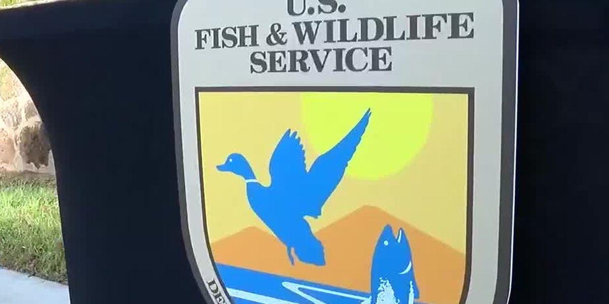 Bird coming off endangered list thanks to Ft. Benning conservation efforts