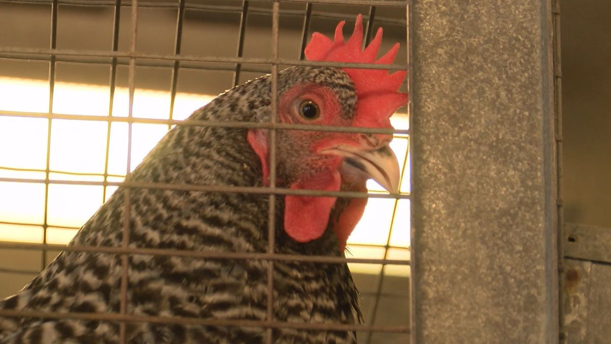 Chatham County Mosquito Control using chickens to detect Triple E