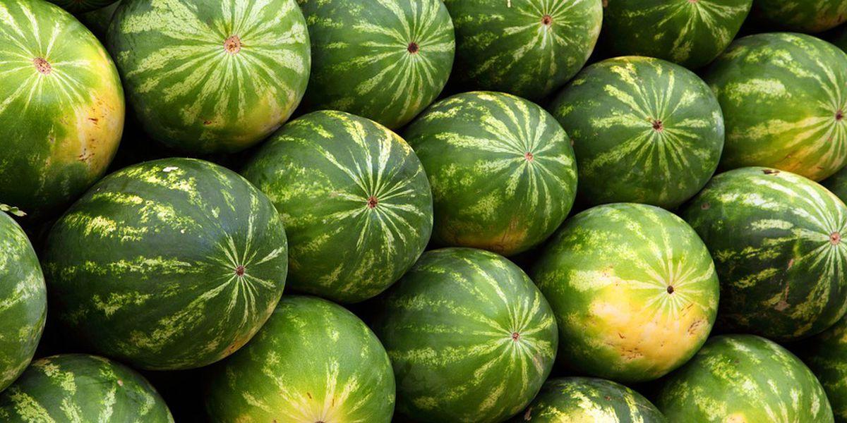 Watch: The Hampton County Watermelon Festival parade