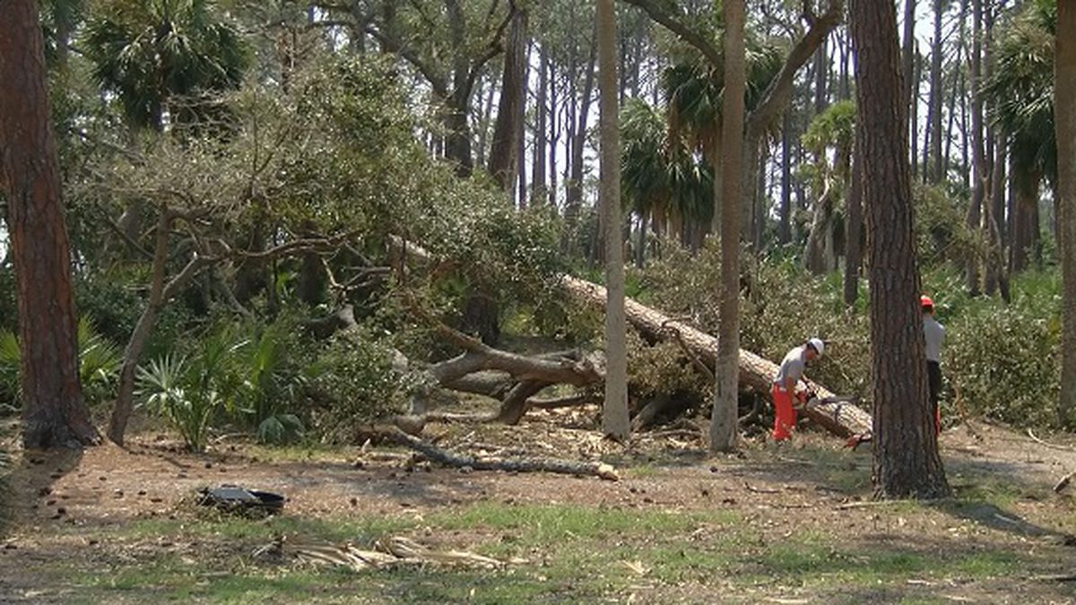 Crews working to clear downed trees at Hunting Island State Park