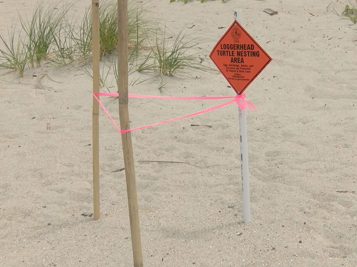 Turtle nesting season wrapping up in the Lowcountry