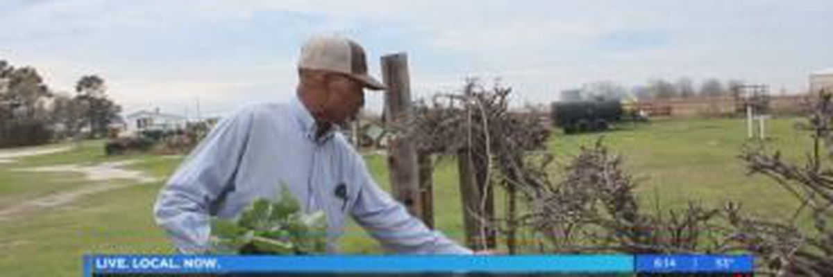 Proud to be a GA Farmer: Willie Scott