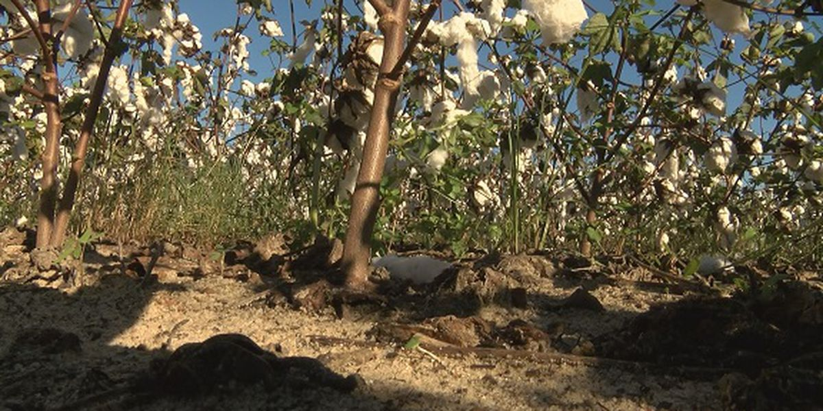 Proud to be a Farmer: Local crops impacted by storm