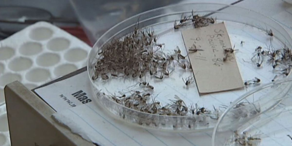 Mosquitoes test positive for West Nile in Hennepin and Ramsey counties
