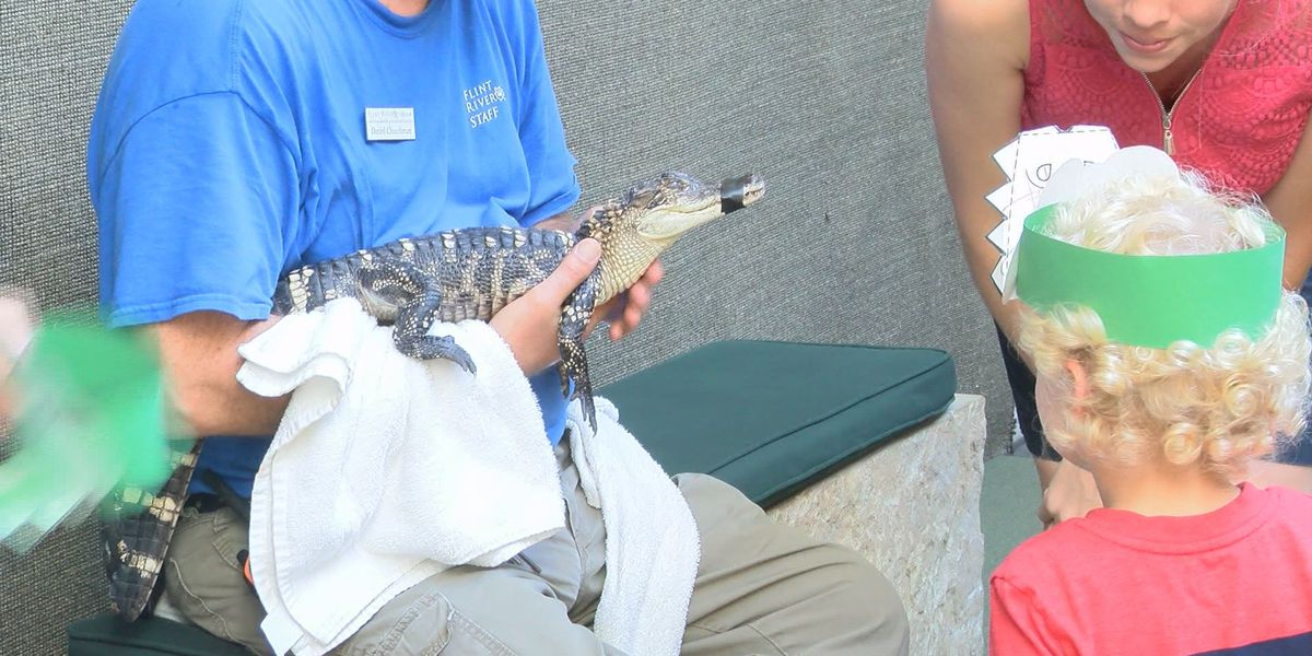 Should you be worried about 'meth-gators'?