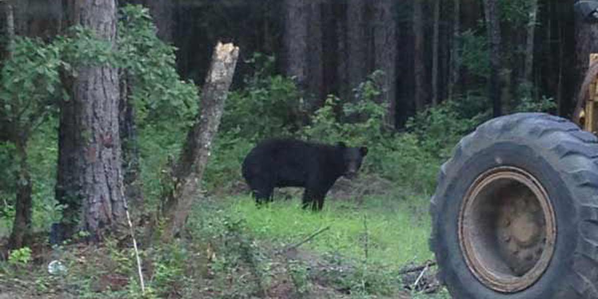 SPOTTED: Bear around Fort Stewart