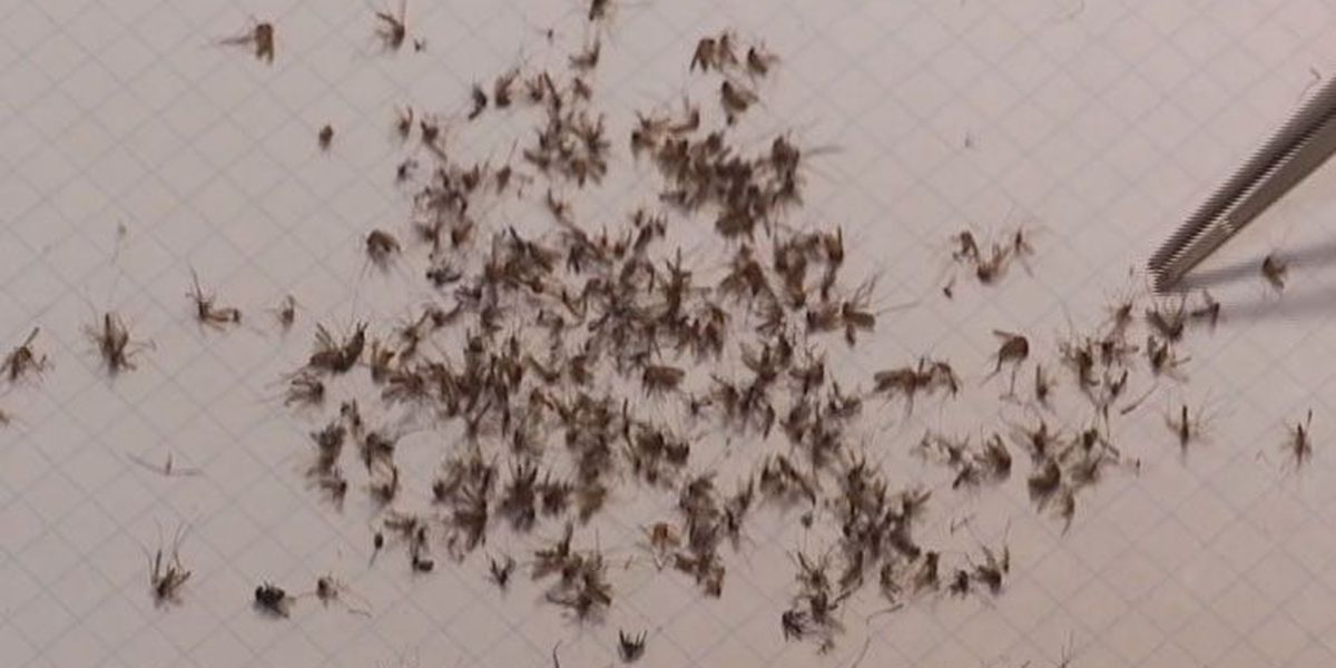 Mosquitoes testing positive for West Nile Virus still being monitored in Beaufort Co.