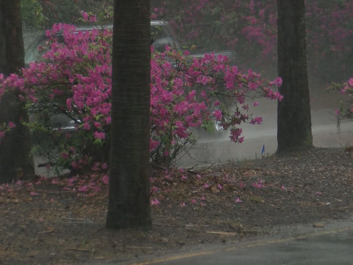 First Alert Weather Academy: Understanding the 'smell' of rain