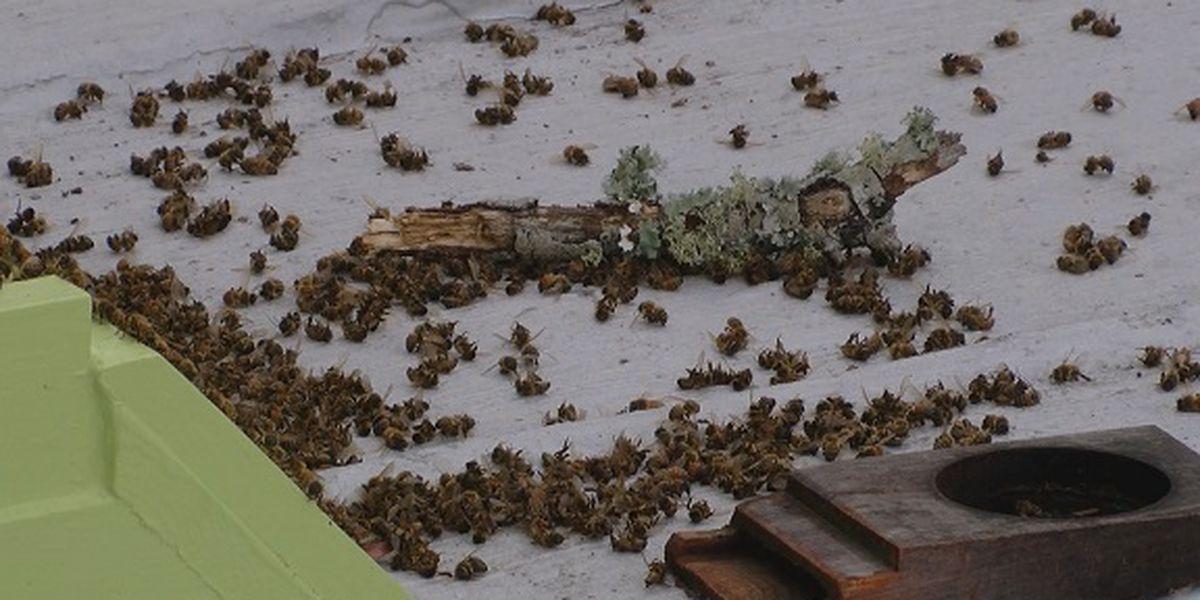 City of Tybee Island takes steps to help save bee population