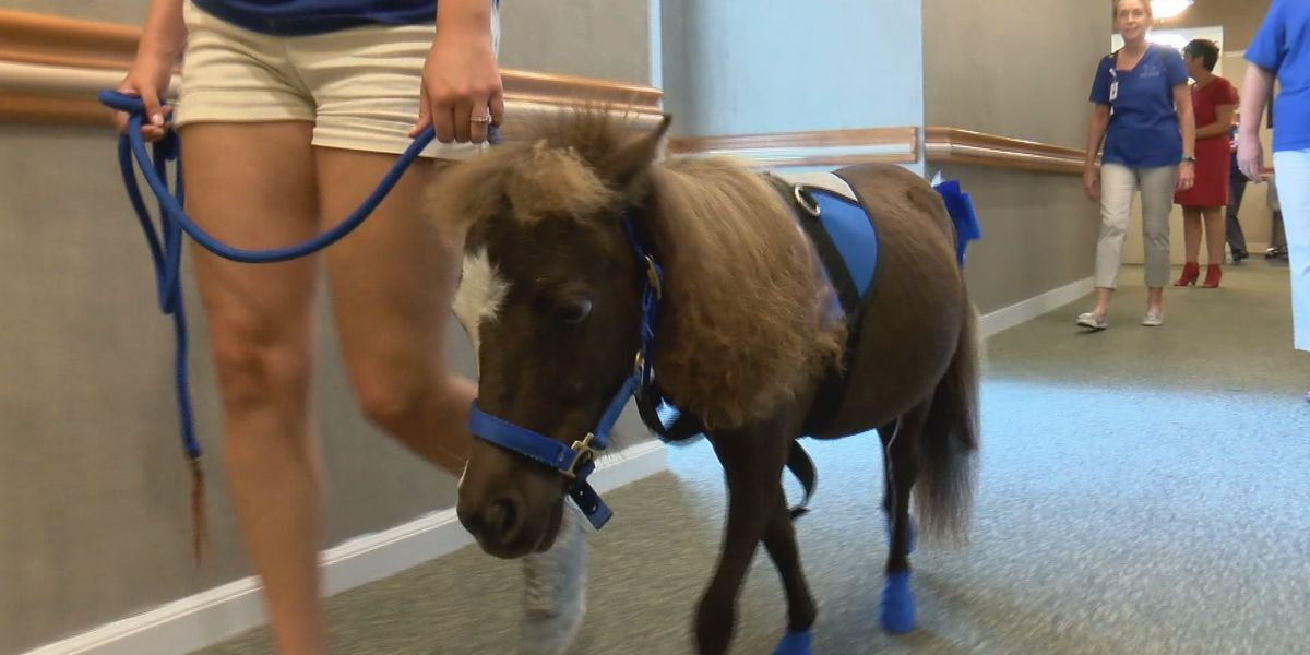 Good News: Minis 2 Love therapy horses