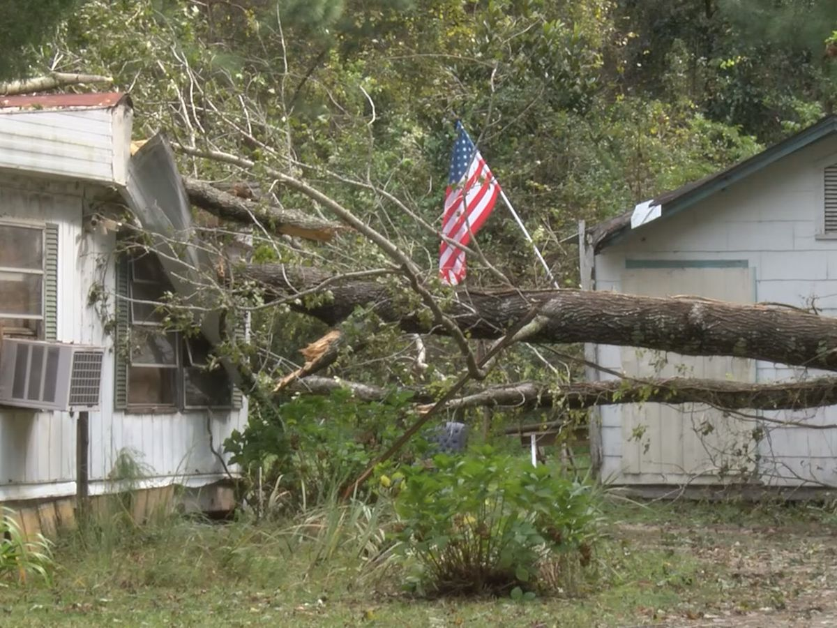 Hurricane Michael slams tree through home in Tattnall County