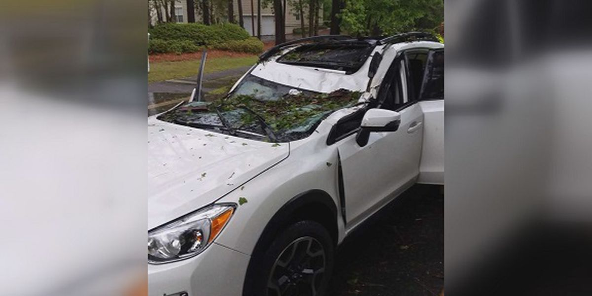 Tree falls on vehicle with 5 people inside near Hilton Head Island Airport