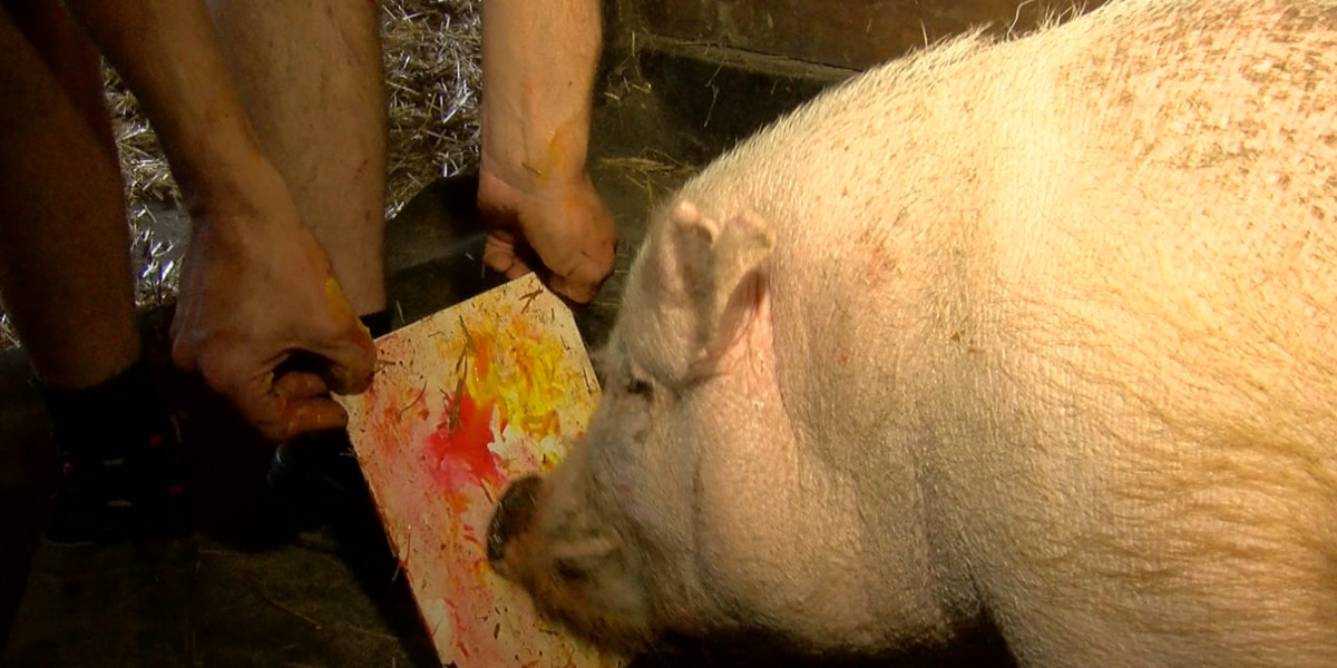Meet Teddy, the potbelly pig with Picasso like skills
