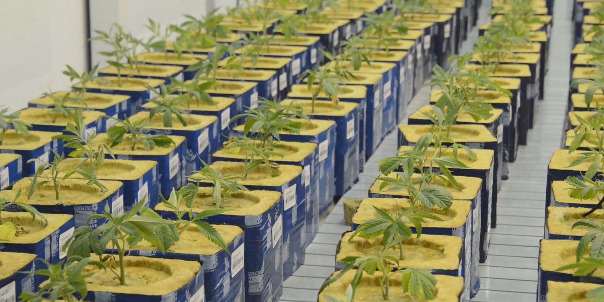 Advocates for medical marijuana gather at South Carolina state house