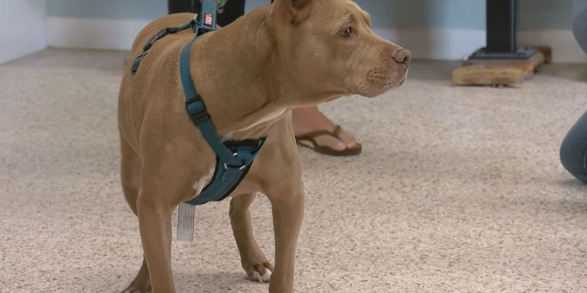 Humane Society of Greater Savannah finds home for 2,300 pets