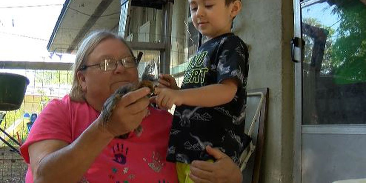 Baby chicks stolen from 3-year-old Bloomingdale boy with autism