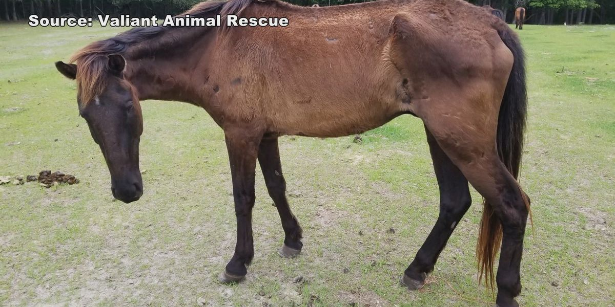 Still no arrests for two major animal abuse cases in Hampton County