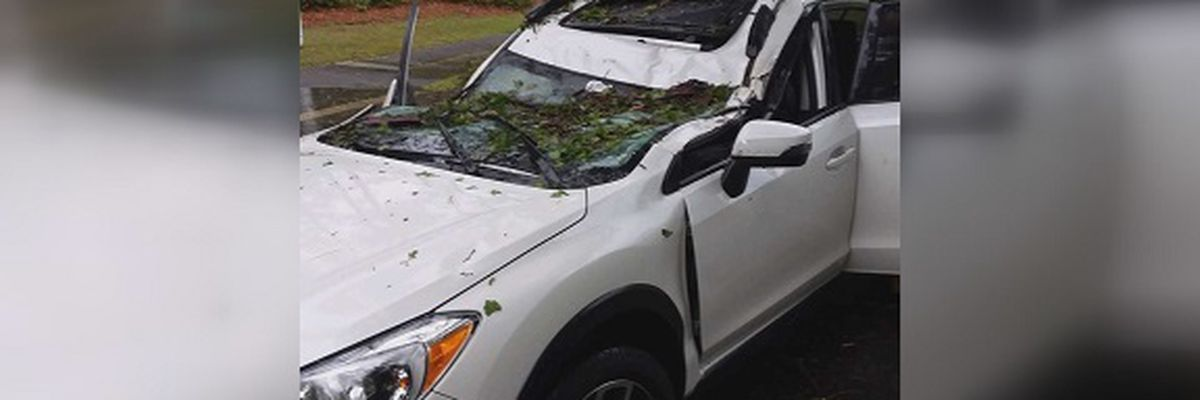 Tree falls on vehicle with 5 people inside near Hilton Head Island Airport