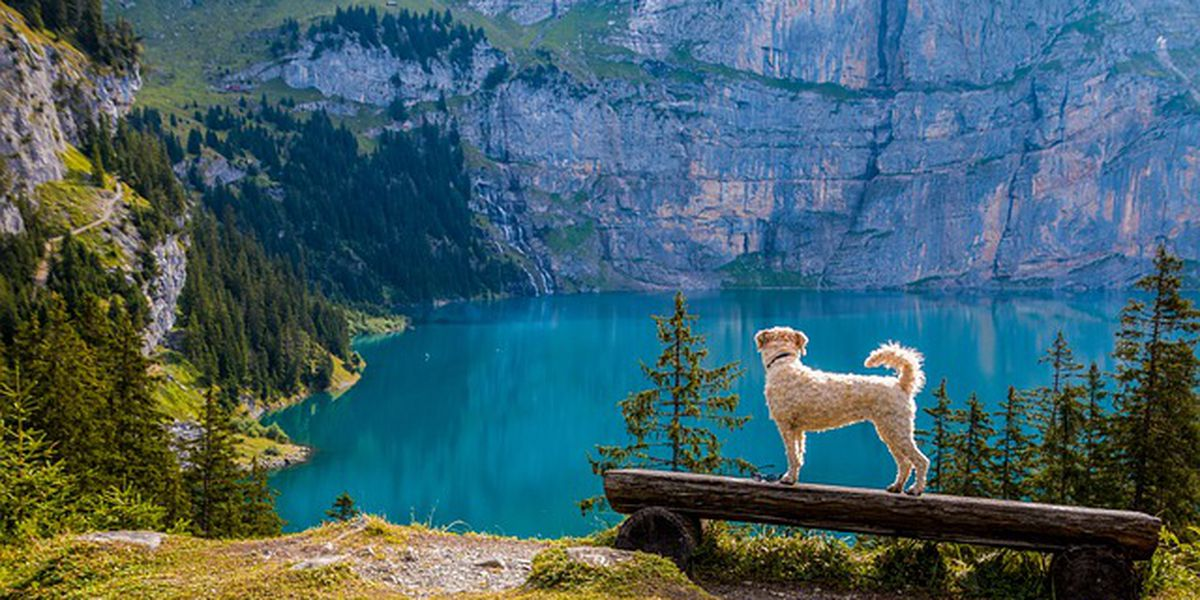 Make sure you take these things into consideration before taking your dog on a hiking adventure
