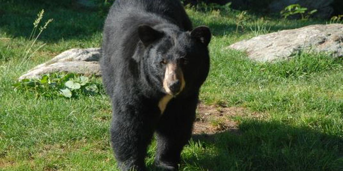 DON'T FEED THE BEARS: SCDNR urges residents to take down bird feeders if black bears spotted in neighborhood