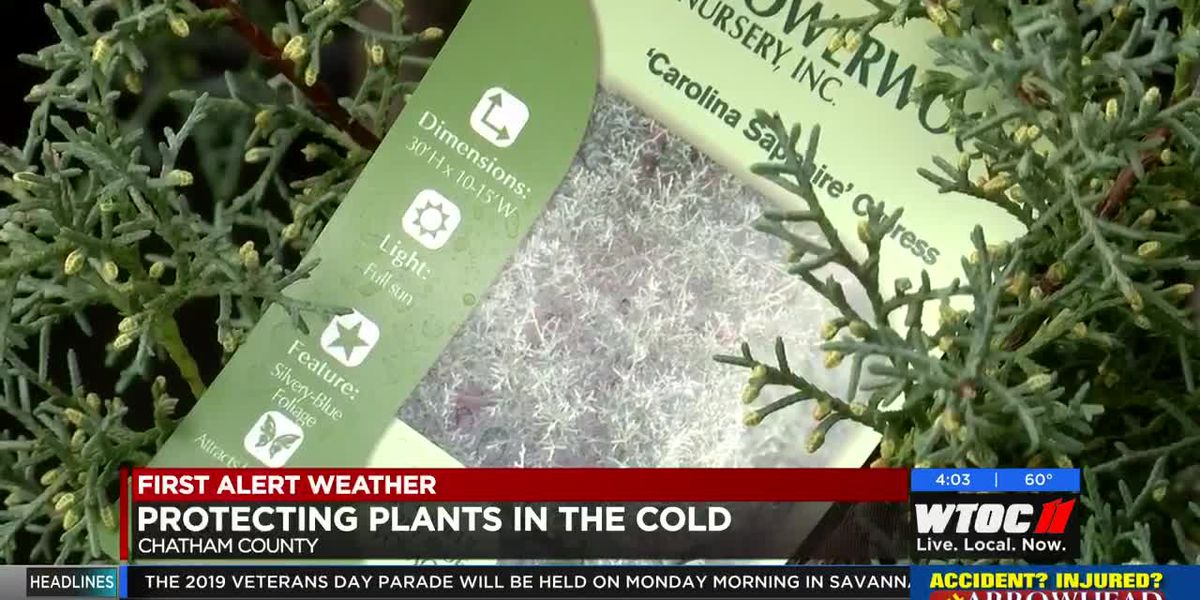 Protecting plants, pets, and people as the temperatures turn cold